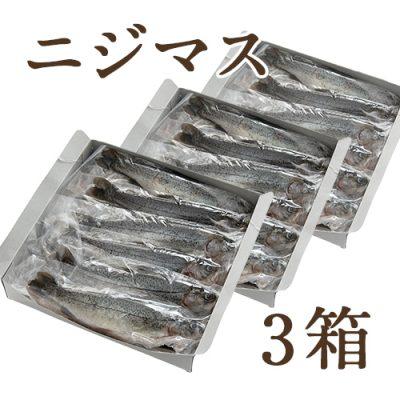 冷凍川魚 ニジマス 3箱