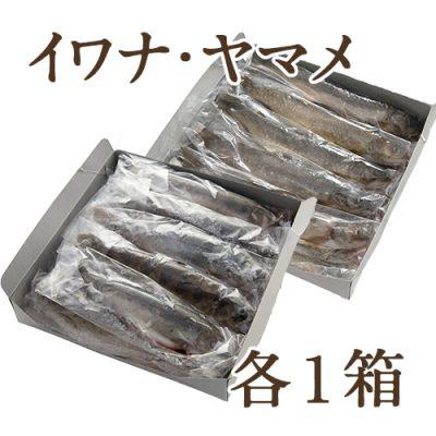 冷凍川魚 イワナ・ヤマメ 各1箱