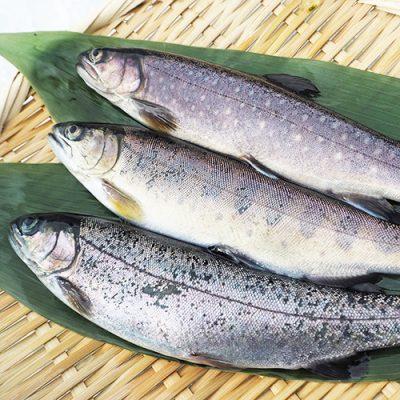 新潟産 冷凍川魚(ニジマス・イワナ・ヤマメ)