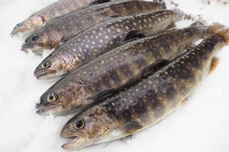 雪国が育んだ「養殖川魚」をご紹介!