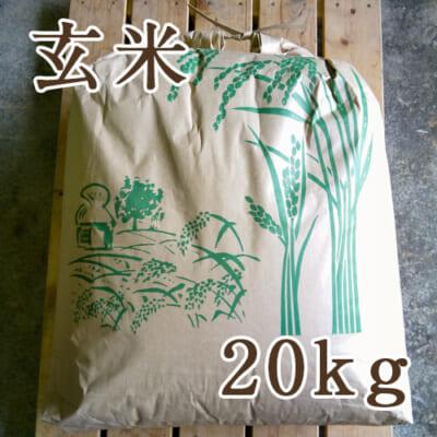 佐渡産ササニシキ 玄米20kg
