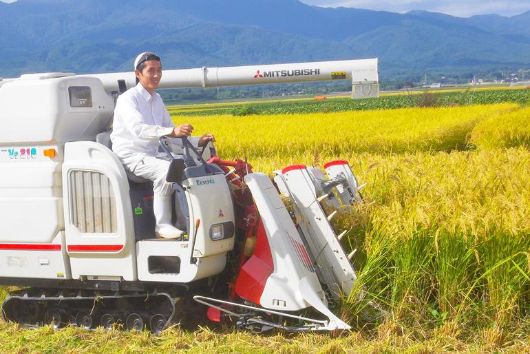 朱鷺の舞う佐渡市で農薬や化学肥料不使用の米作り