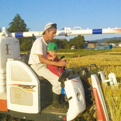 高島農場稲刈りの様子