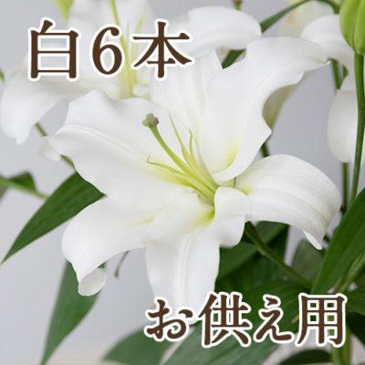 【お供え用ラッピング】オリエンタルユリ 白6本