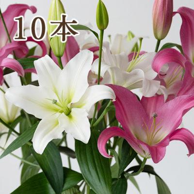 オリエンタルユリ(白・ピンク)選べる10本