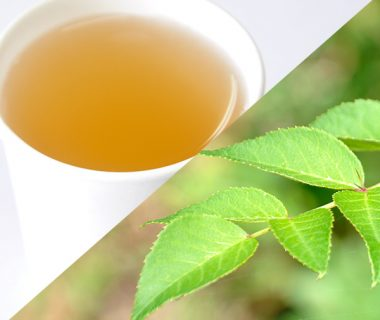 タラの葉茶