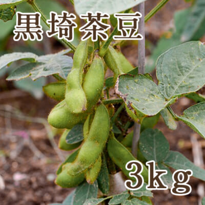 新潟産 黒埼茶豆 3kg