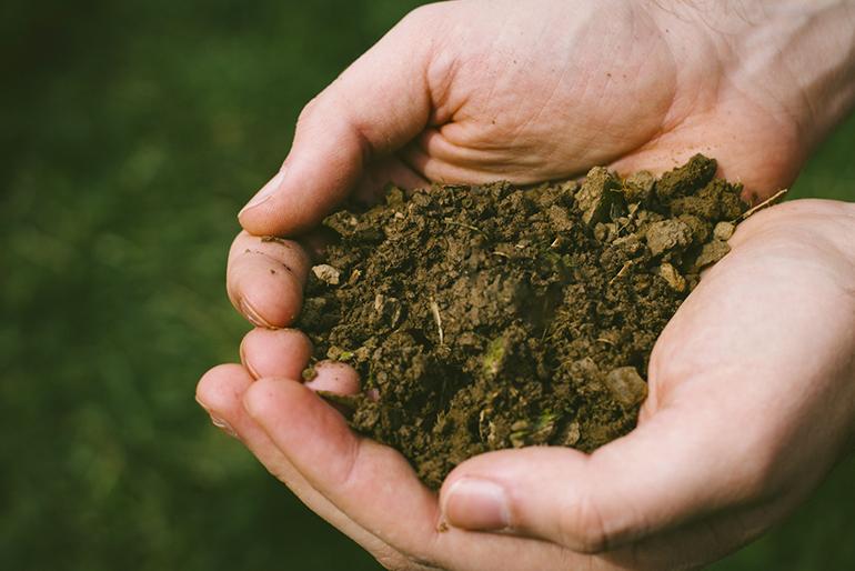 美味しさを生む栄養たっぷりの土壌