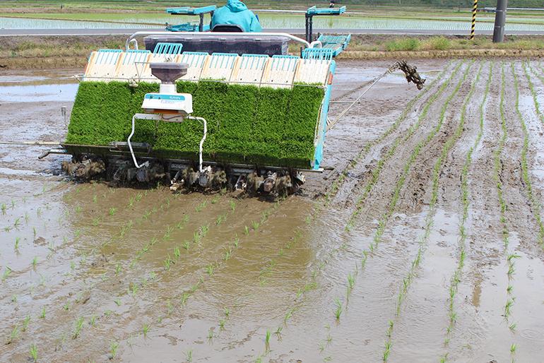 美味しい米づくりは良い「土作り」から