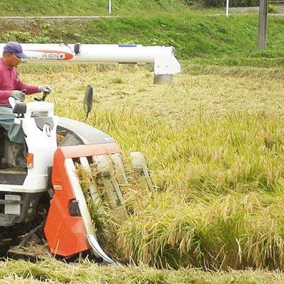 予約注文:令和元年度米 新潟産コシヒカリ(特別栽培米)