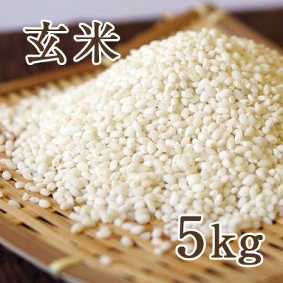 新潟産こがねもち 玄米5kg