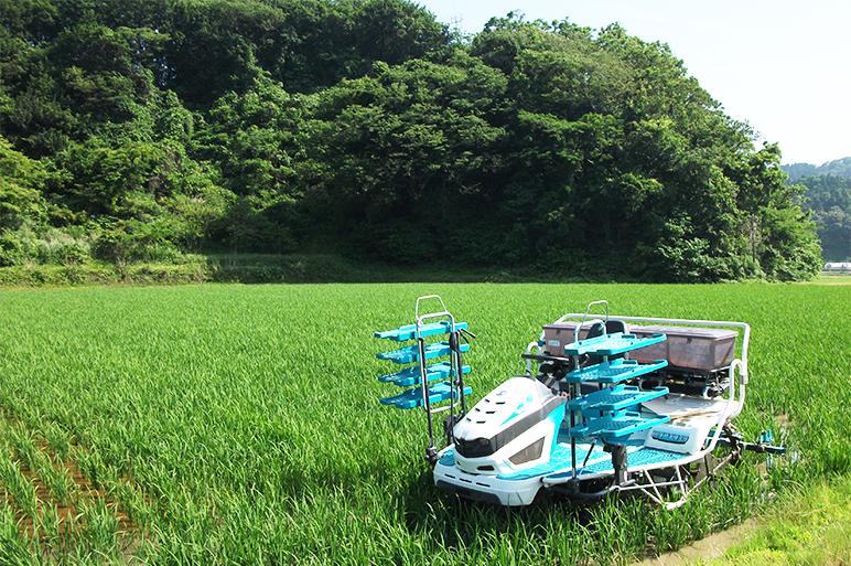 自社配合肥料で土壌を活性化!こだわりのもち米作り