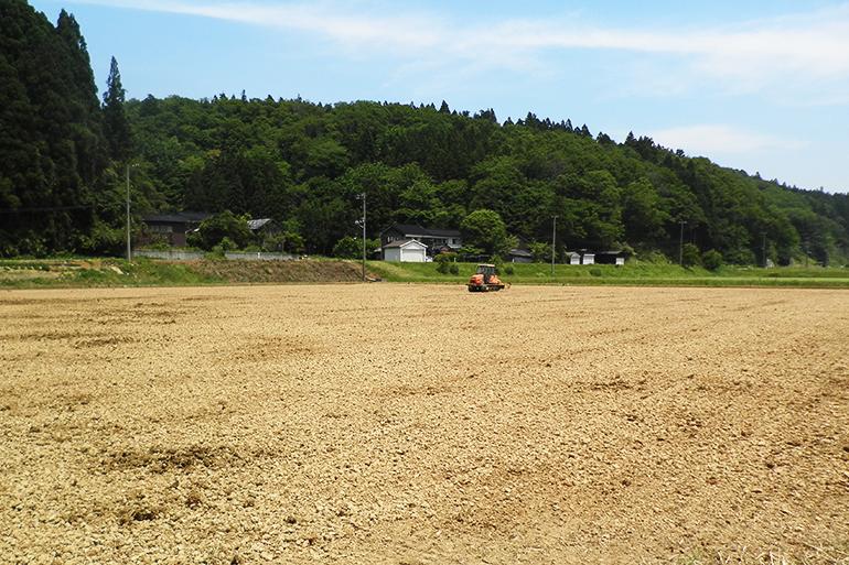 有機肥料で土壌を活性化