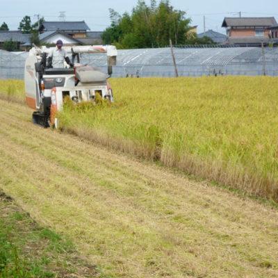 土壌にあった特注の有機肥料で栽培