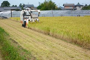 2.稲の成長具合を見極める観察