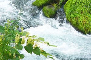 1.上流域から直接引く澄んだ水