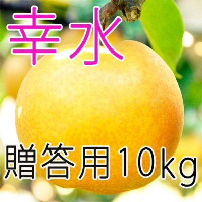【贈答用】幸水10kg