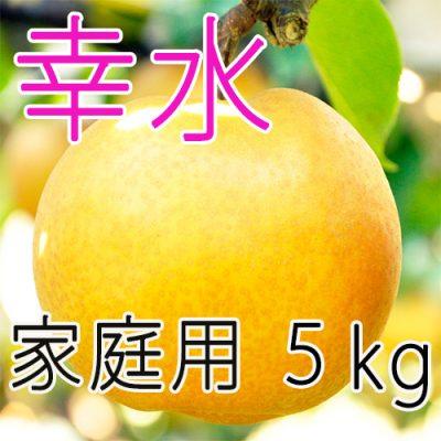 【家庭用】幸水5kg