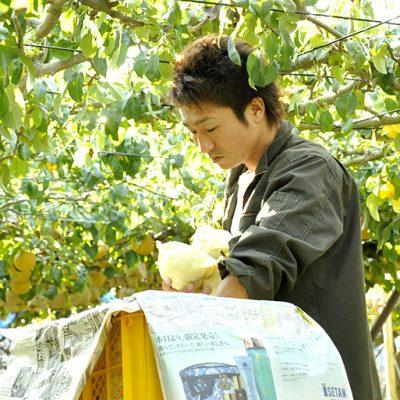 収穫作業は丁寧に手作業で行います。