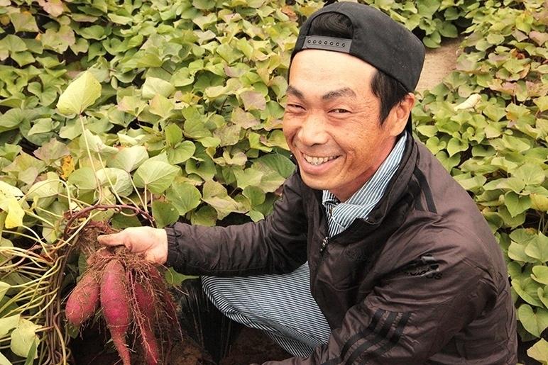 通気性・排水性の良い土壌が育むさつまいも
