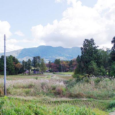 柏崎市鵜川地区の棚田にて栽培しました