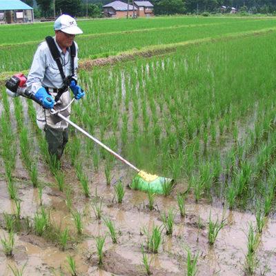 食の安全にこだわり、農薬を使わずに育てました