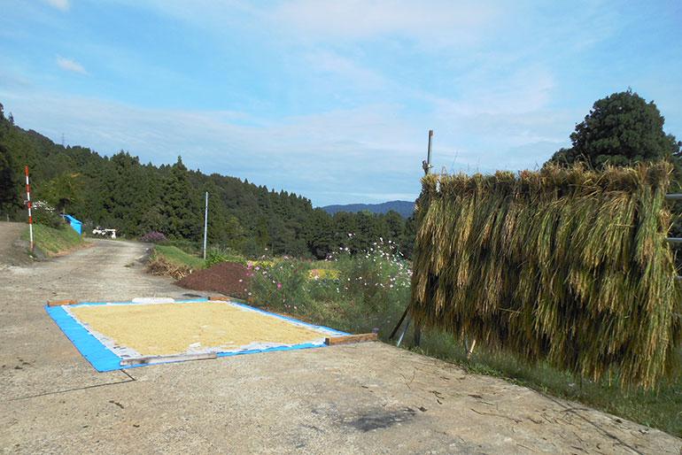 収穫前後までこだわる米作り