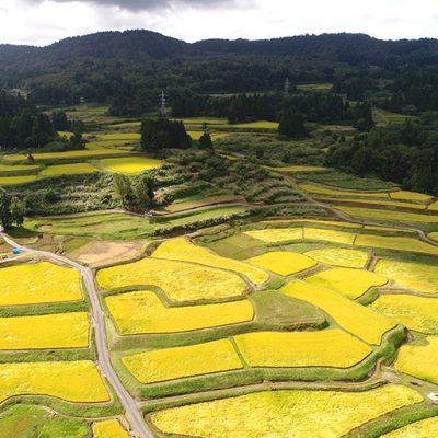 絶品米を育む広大な棚田