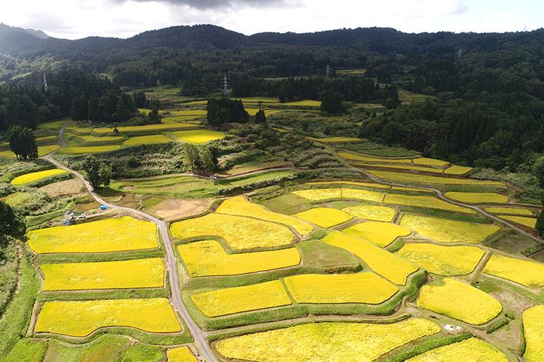 湧き水が流れ込む美味しい米の産地「一之貝」