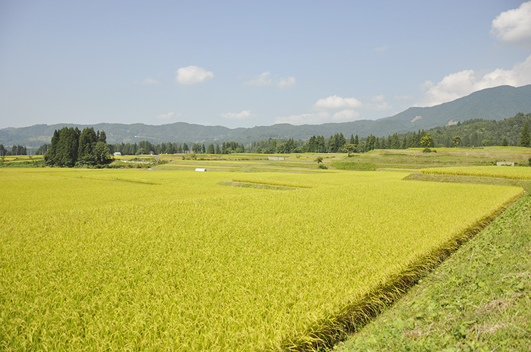 より安全で美味しいお米を。棚田で行う特別栽培