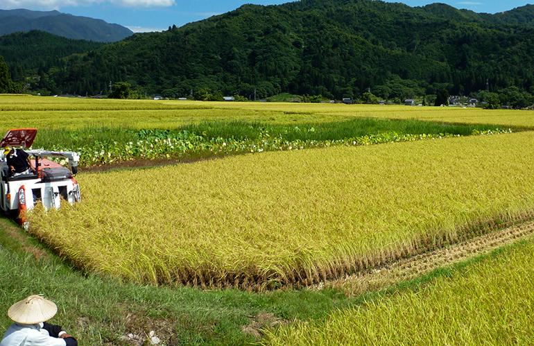 「棚田栽培米」であること、食味・安全を重視