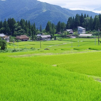 令和元年度米 魚沼産 コシヒカリ「ツバメの飛び交う棚田米」(特別栽培米)