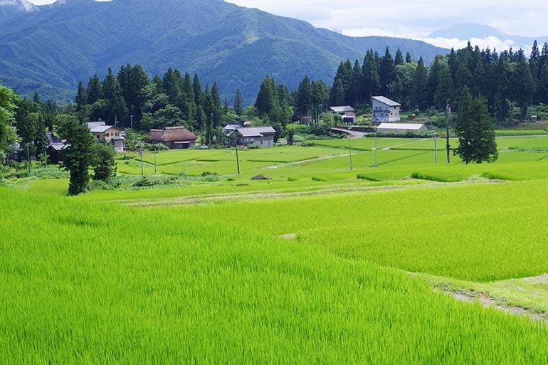 山際にある自然豊かな山里にて栽培