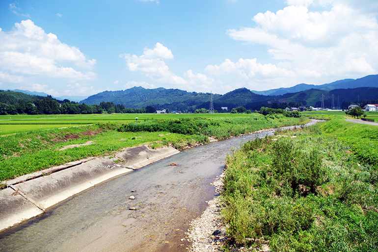 魚沼地域でも特に自然あふれる水田にて栽培