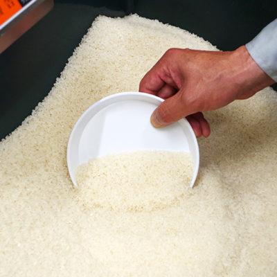 美しい純白のお米を出荷