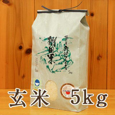 塩沢産 棚田米 コシヒカリ 玄米5kg