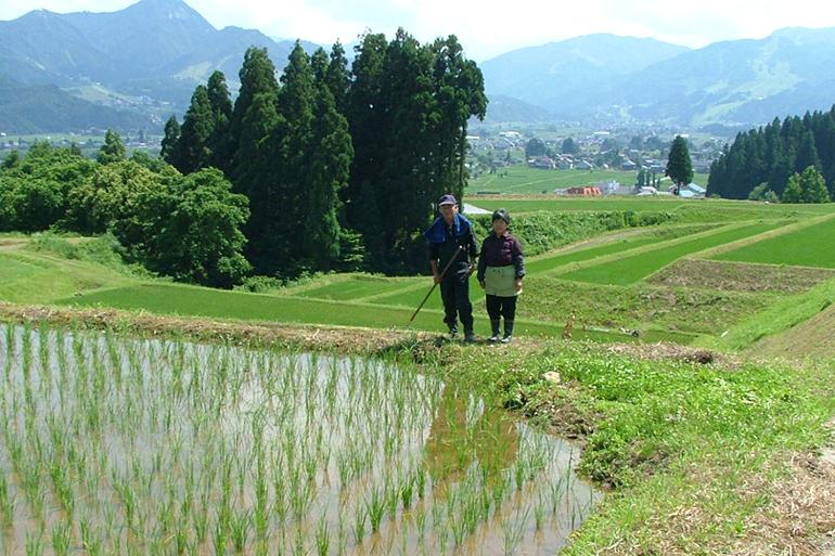 綺麗な水で育てた棚田米をぜひお楽しみください!