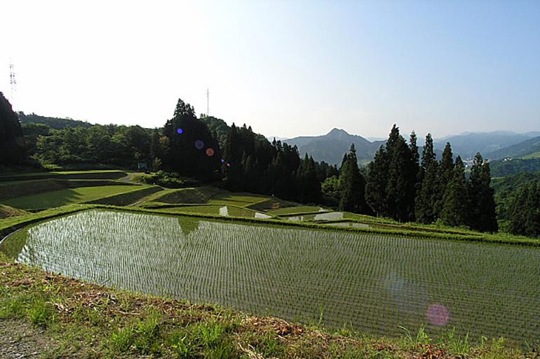 2.適度に肥沃な土壌がコシヒカリの粘りを生み出す