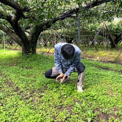 果樹がのびのびと根を張れるふかふかの土壌