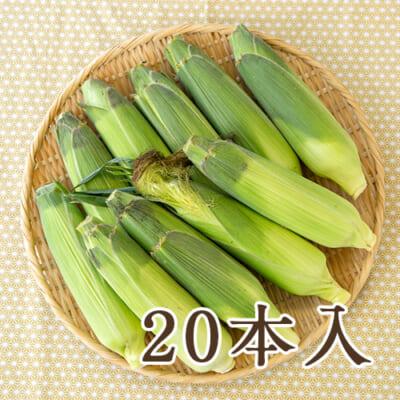 津南産トウモロコシ「わくわくコーン」10kg