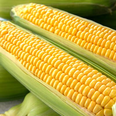 「甘党農家」選りすぐりのトウモロコシ