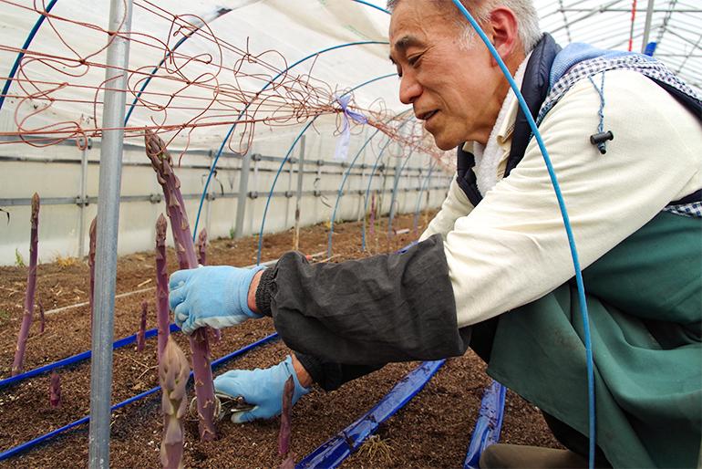 栽培における納豆菌の活用