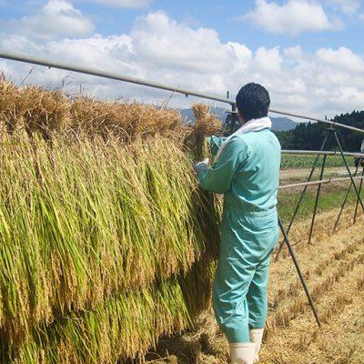 自然の恵みたっぷりの極上米に仕上げる