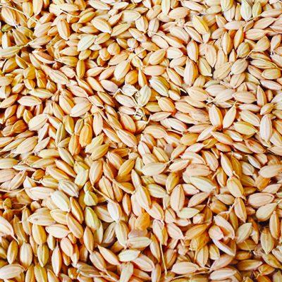 常温の風で籾(もみ)を乾燥させます