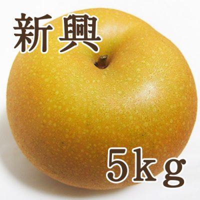 新興 5kg(7~11玉)
