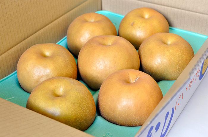 季節到来!ヤマヨ果樹園の極上和梨!