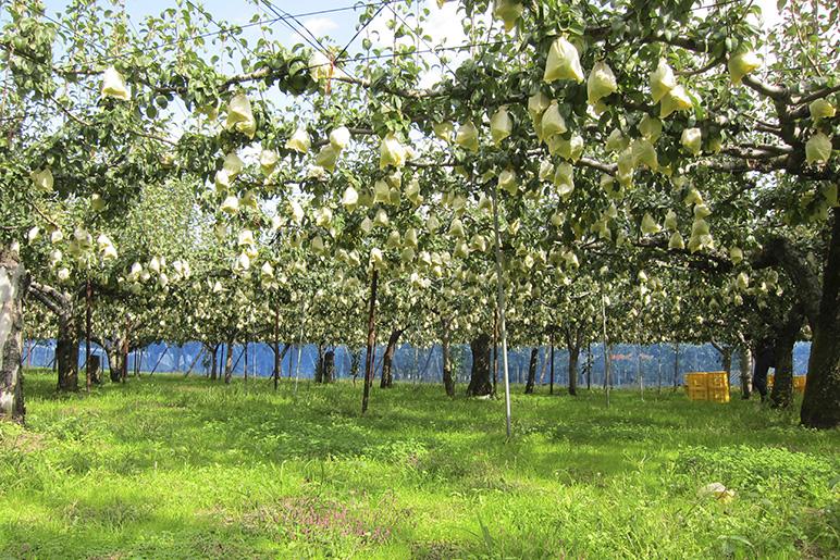 生態系生体システムプログラム農法