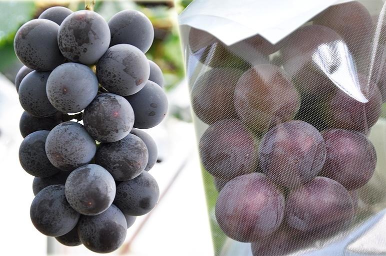 古くから果樹栽培に取り組んできた果樹園の生み出す果実