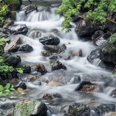豊富なミネラル分を含む矢代川