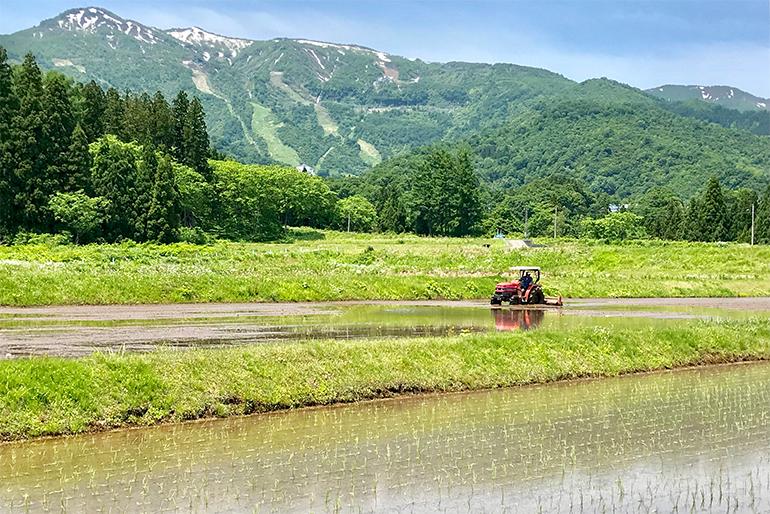 2.稲の成長を促進するミネラル